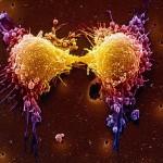PLX4720, addio tumori?